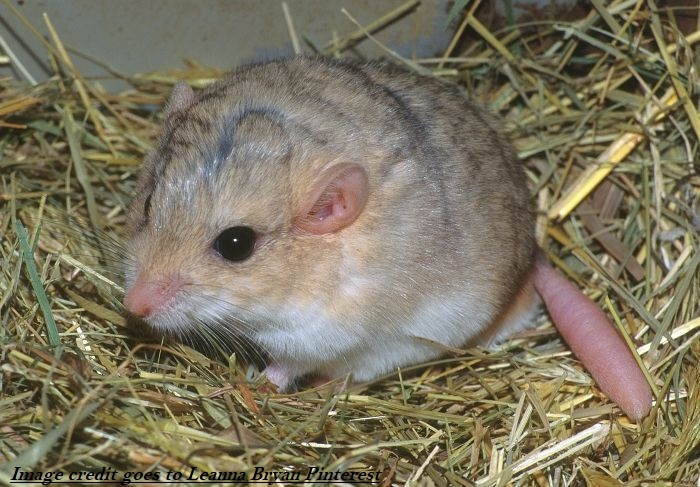 Simple Guide: From Acquiring To Caring For Gerbils - SFF