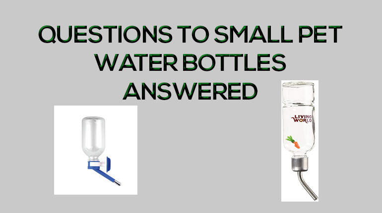 All Your Small Pet Water Bottle Questions Answered! - SFF