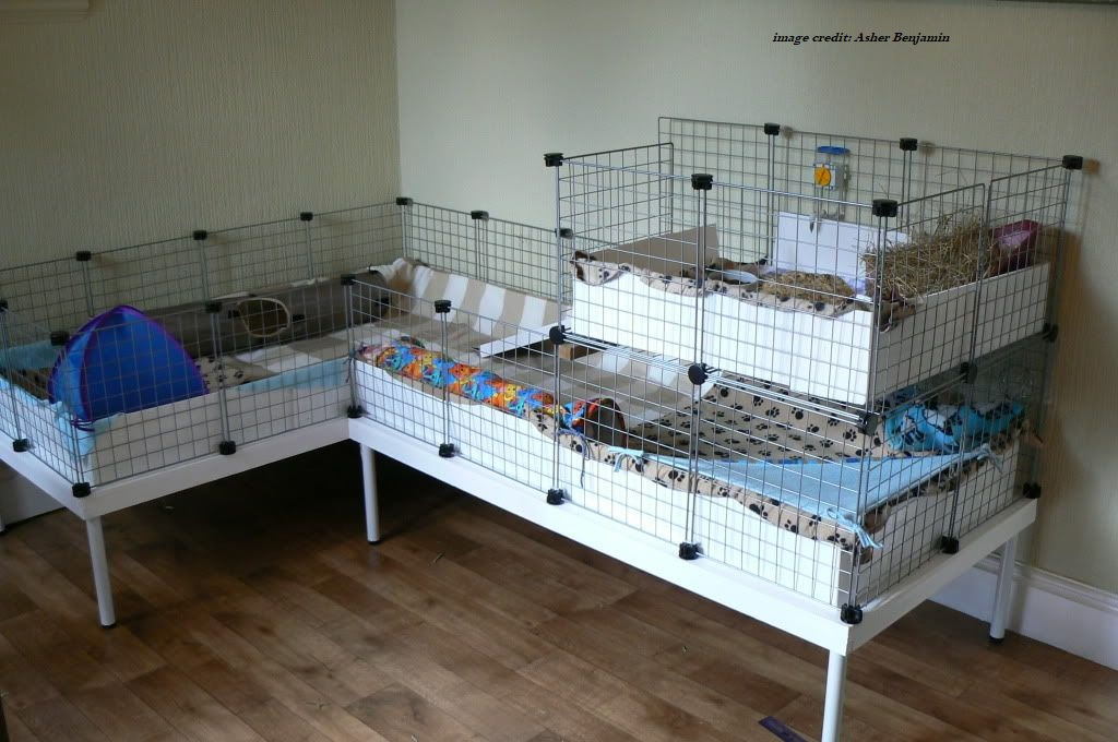 Guinea Pig Cage Options To Choose From Small Furry Pets