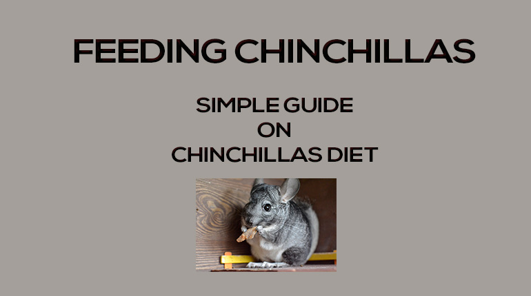 Chinchilla Cages Bedding & ACCs Archives - SFF