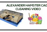 Cleaning The Alexander Hamster Cage Video